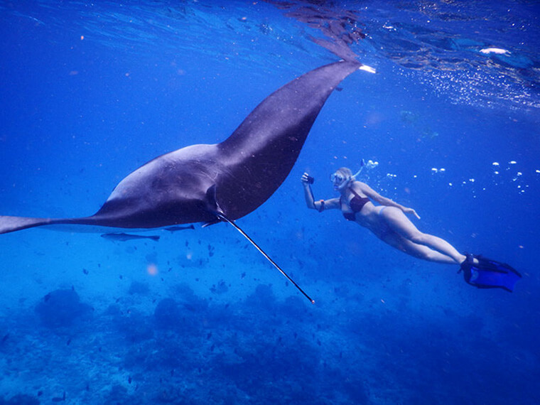 free diving with the manta rays in the maldives