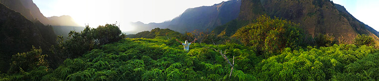 the greenest fern forest at tai valley on maui