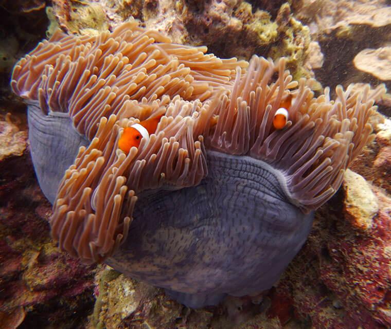 Malaysia trip: Island Diving and Kuala Lumpur Dreaming