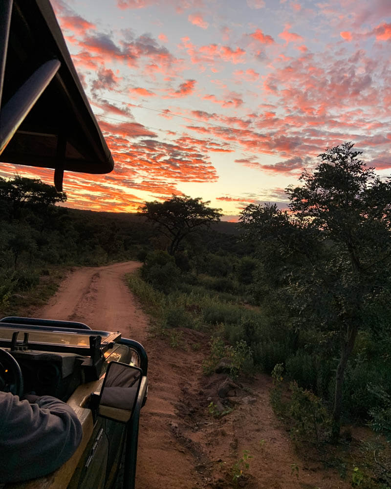 self driving kruger is an amazing way to experience the park